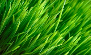 Lawn Care Loveland OH