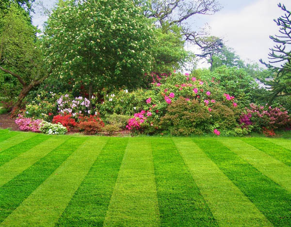 Lawn Care Maineville OH