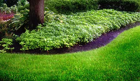 Lawn care mason oh degree lawn landscape for Lawn and garden care services