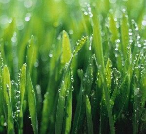 Lawn Care West Chester OH